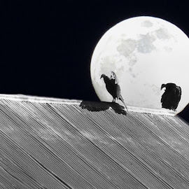 The Watchers by Dorothy Day - Digital Art Animals ( moon, nature, barn, night, birds, vultures )
