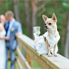 Wedding photographer Alena Dombrovska (Jusufotografas). Photo of 27.01.2015