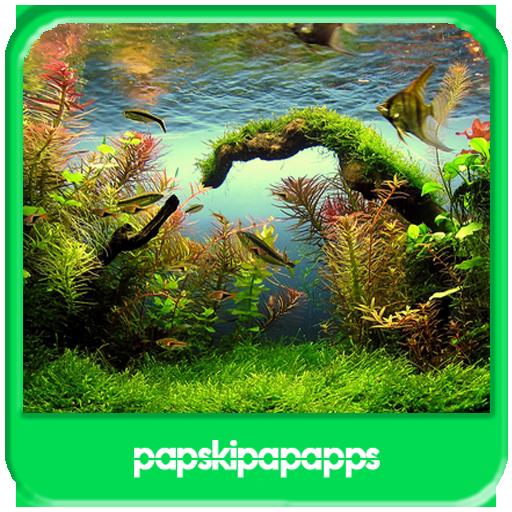 Aquascape Aquarium Designs