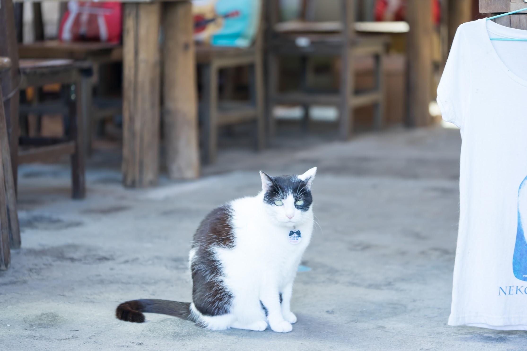台湾 猴硐 猫1