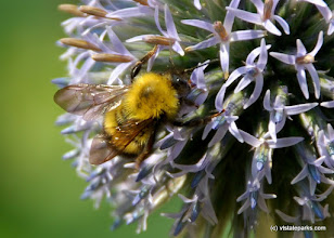 Photo: Busy Bee At Ricker Pond State Park