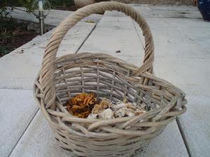Petite_cueillette_de_champignons.jpg