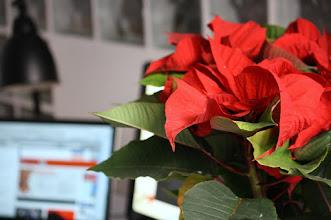 Photo: Ya es Navidad en casofina aabrilru (gracias a @suhuertoencasa)