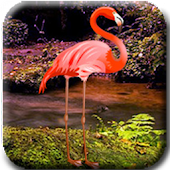 Flamingo Forest Escape