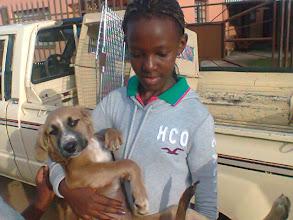 Photo: A Dog being returned after sterilisation