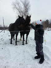 Photo: Next door to the place where we went to pick up our boat  had a couple horses