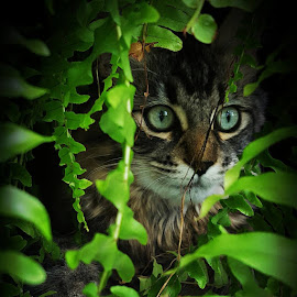 Jungle kitten by Erin Zoe Chow - Animals - Cats Portraits