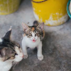 Untitled by Haikal Rshd - Animals - Cats Kittens ( cats, kitten, cat, meow, furry, feline, kitty )