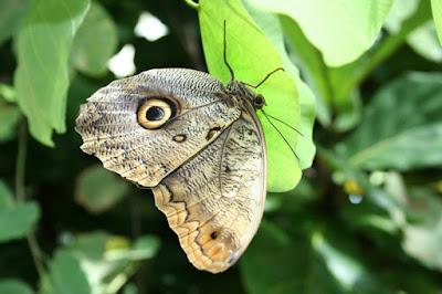 Farfalla di liamcoll