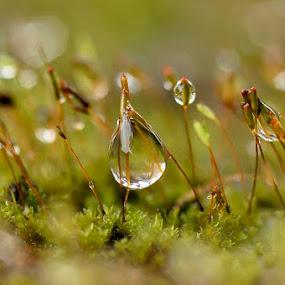 by ERFAN AFIAT SENTOSA - Nature Up Close Natural Waterdrops