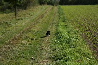 Photo: Kleiner Hund in großer Welt