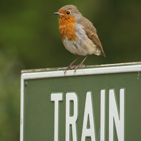 Which way train? by Garry Chisholm - Products & Objects Signs ( park, green, wildlife, chisholm, garry, bird, sign, cotswold, robin, flickr, viewbug, train, redbreast,  )
