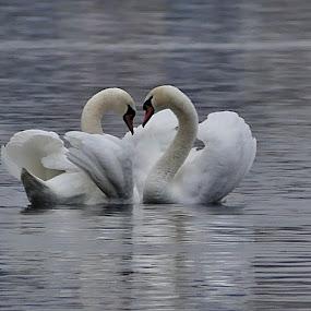 Něžnost a láska by Lenka Bryndová - Animals Birds