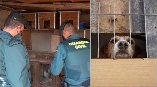 El Seprona retira gallos de pelea y perros en Roquetas