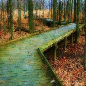 Walk Through The woods by Dennis Granzow - Landscapes Travel ( fall season, ohio, digital art, landscape, woods, boardwalk )