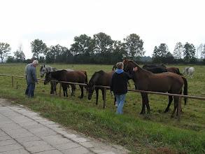 Photo: BA010184 Janow Podlaski - stadnina koni