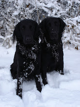 Photo: Motte und Aika im Schnee