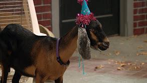 The Goat thumbnail