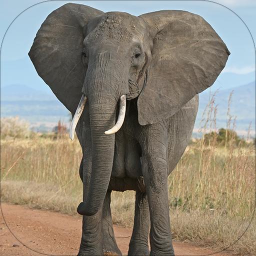 大象声音 音樂 LOGO-玩APPs