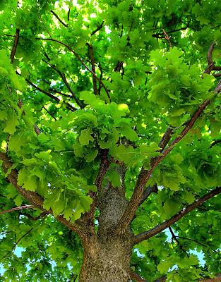 Verdi chiome di Naldina Fornasari