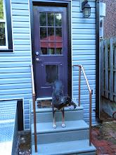Photo: yes a dog door