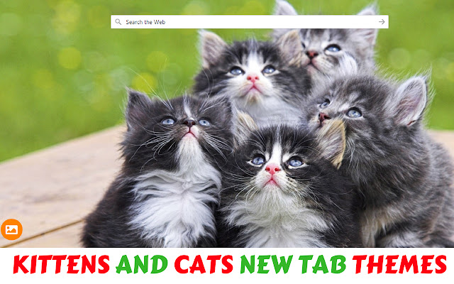 Kittens and Cats HD Wallpapers - New Tab
