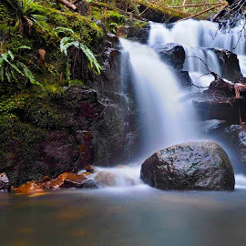 Fortunate Find Falls by Gary Tew - Landscapes Waterscapes ( mountain, rocks, ferns, waterfall, water )