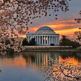 Cherry Blossoms and the Jefferson by Mike Lennett - City,  Street & Park  Historic Districts ( water, cherry, national park, reflection, memorial, jefferson, washington dc, mike lennett, sunrise, tidal basin, blossoms )