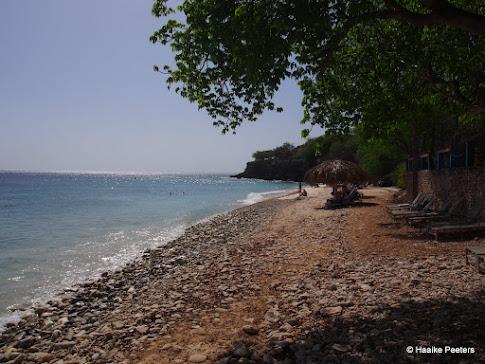 Curaçao - Playa Kalki (Le petit requin)
