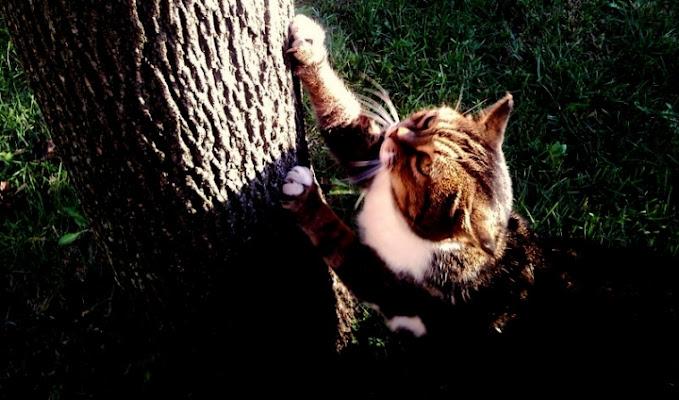 Manicure felina di Josephine