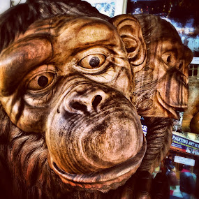Wooden Monkeys by Geary LeBell - Instagram & Mobile iPhone ( chimpanzee, wooden, ape, primate, wood carving, monkey, chimp )