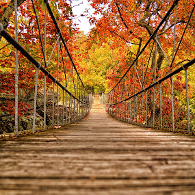 Fall 2012 by Abet Rhupert - Landscapes Travel ( autumn leaves, fall, pwcautumn, trees, forest, bridge, autumn colors, travel, autumn trees )