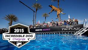 2015 Incredible Dog Challenge thumbnail
