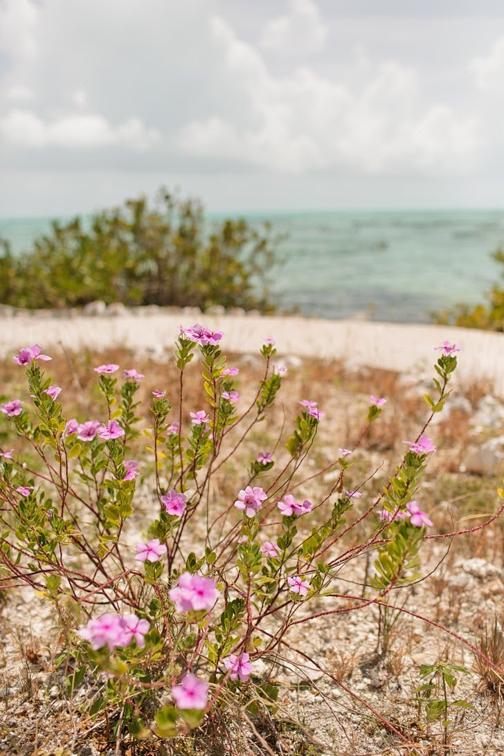 Things to Do in Providenciales Turks and Caicos Islands.