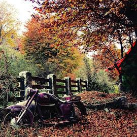 Fall by Catalina Smarandoiu - Instagram & Mobile Android (  )