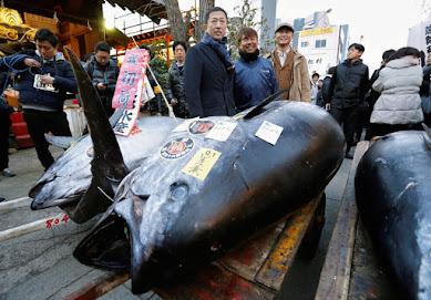 零細漁業は廃業しろと?大手を優遇する「水産庁の漁獲枠設定」が日本食文化を破壊する