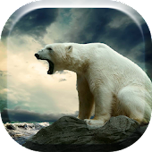 Polar Bears HD Live Wallpaper