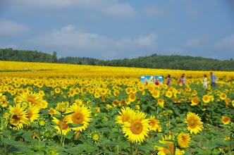 Photo: 北竜町の景色・8月の2