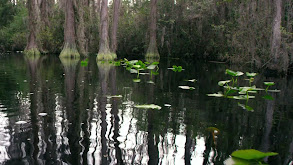 Okefenokee Blackwater Swamp thumbnail