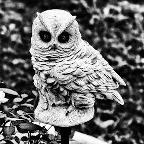 Owlbw by Grady  Welch - Black & White Objects & Still Life ( b&w, white, owl, black, black and white, stone )