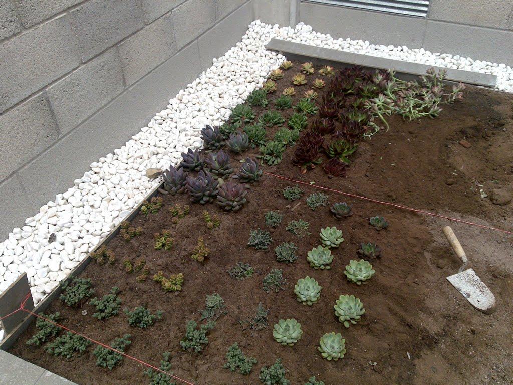 Plantación en cubierta vegetal Fitum