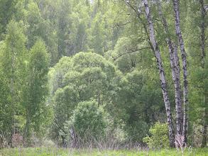 Photo: Зелень