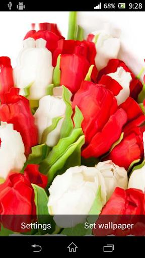 Tulip Ripple Flower