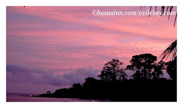 Photo: Petit matin sur la presqu'île du black Mamba, Busua, western region, Ghana