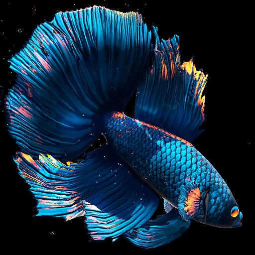 Download 3D Aquarium Live Wallpaper HD On PC & Mac With
