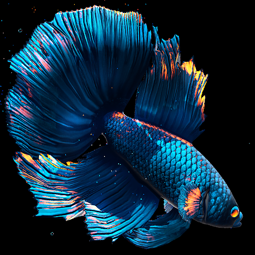 Betta Fish Live Wallpaper Mod Apk