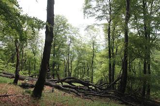 Photo: Južné svahy NPR Rokoš majú pralesovitý nádych