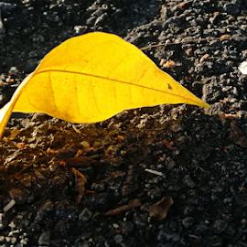 Falling Leaf by Steven De Siow - Nature Up Close Leaves & Grasses ( nature, nature up close, leaf, nature close up,  )