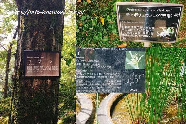東京薬科大学植物園