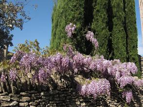 Photo: ... wisteria ...